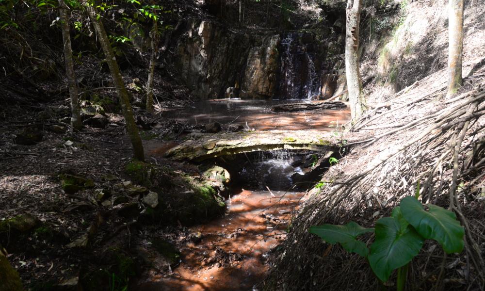 Plett Forest Cabins - Plettenberg Bay