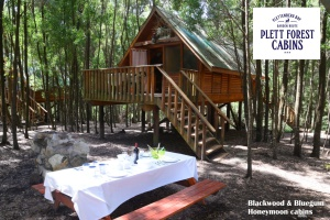 Honeymoon Cabins Plett Forest Cabins